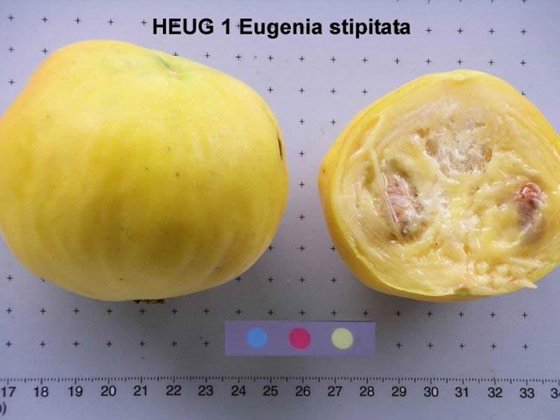 Colombian exotics fruits: Arazá