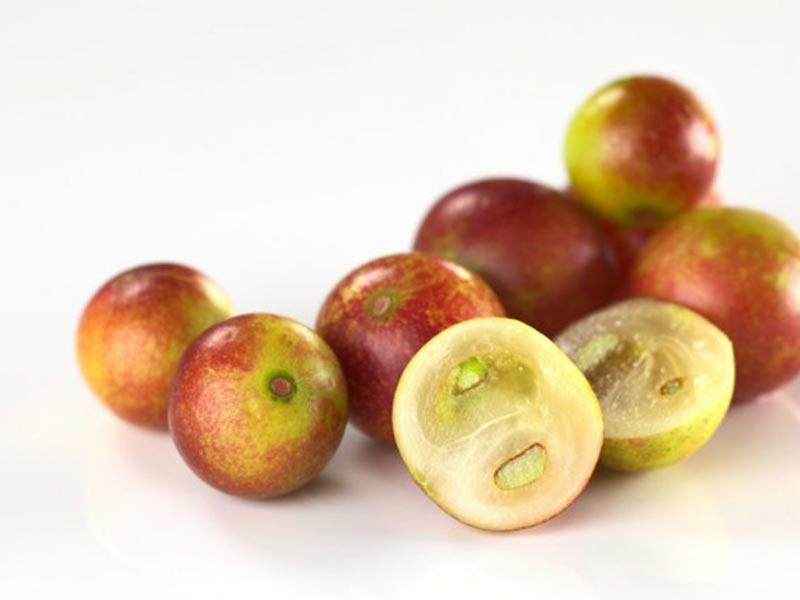 Colombian exotics fruits: Camu Camu