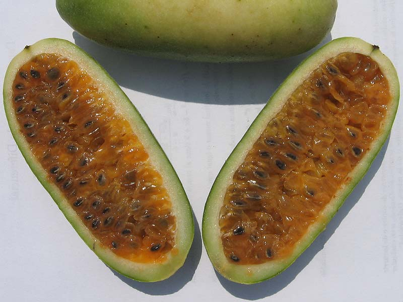 Colombian exotics fruits: Curuba