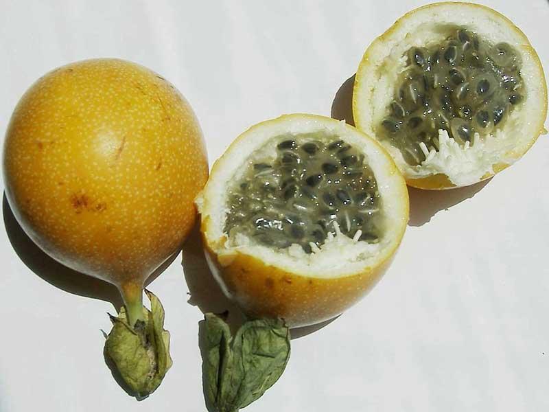 Colombian exotics fruits: Granadilla
