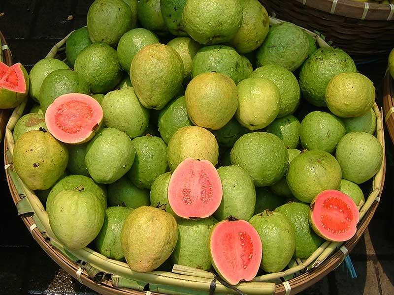 Colombian exotics fruits: Guayaba