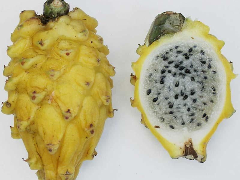 Colombian exotics fruits: Pitaya