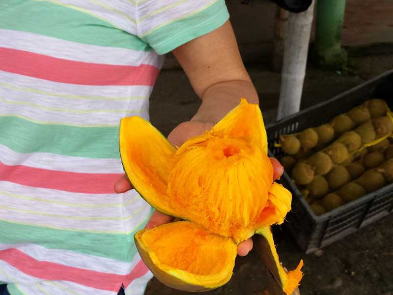 Colombian exotics fruits: Zapote