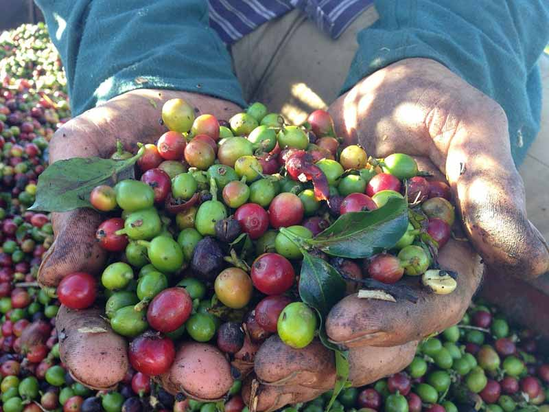 Things You Probably Didn't Know About Colombia : Coffee